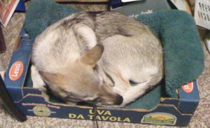 Sleeping in an apple box.