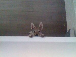 Hiding upstairs