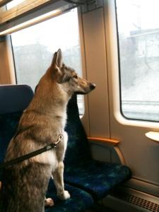 Pandora by train