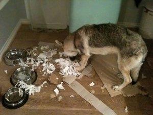 Pandora ripping paper