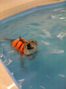Pandora swimming