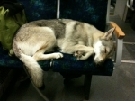 Pandora sleeping in the train