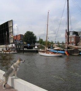 Pandora in Groningen watching ships