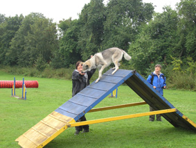 Czechoslovakian wolfdog agility training