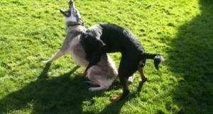 Pandora and her BEST friend ever, Bandit