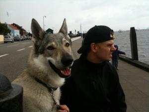 Czechoslovakian wolfdog on Fanoe