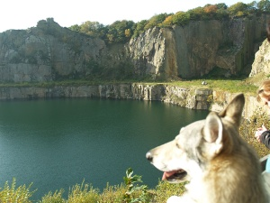 The Opal lake and czechoslovakian wolfdog