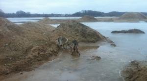 czechoslovakian_wolfdogs_grave_pit