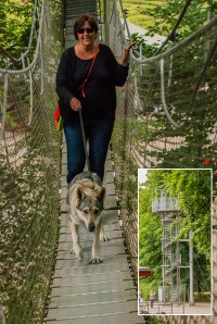 Czechoslovakian wolfdog tree top walking